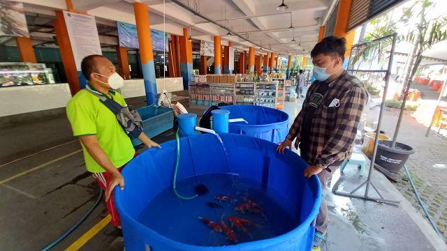 SIB Tetap Sepi Meski Diubah Jadi Pasar Ikan Hias, Pedagang: Rugi!