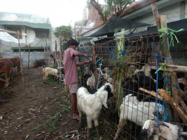 Idul Adha di Tengah PPKM Darurat, Omset Pedagang Hewan Kurban di Surabaya Anjlok Signifikan