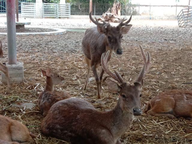 Pembukaan Kebun Binatang Mini Di Pendopo Tulungagung Tunggu Level 2